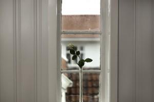 Rosen-i-vinduet